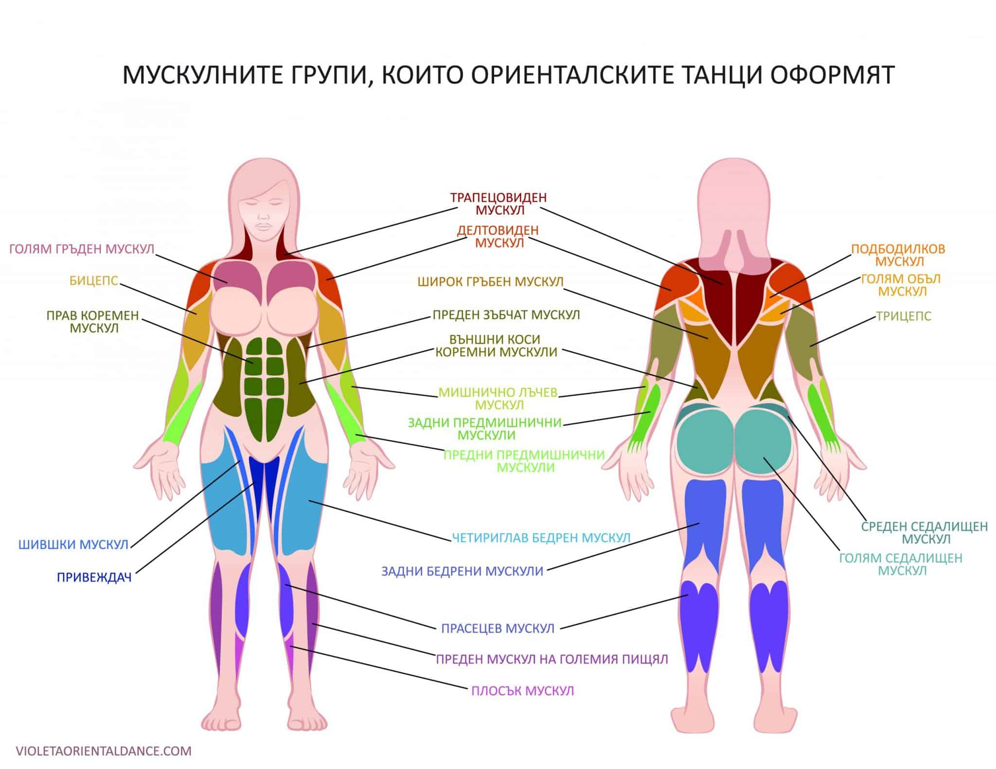Мускулите, които ориенталските танци оформят